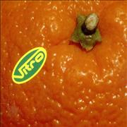 Click here for more info about 'Vitro - Orange'